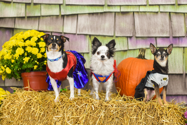 PetValu Lewis Center Halloween Contest